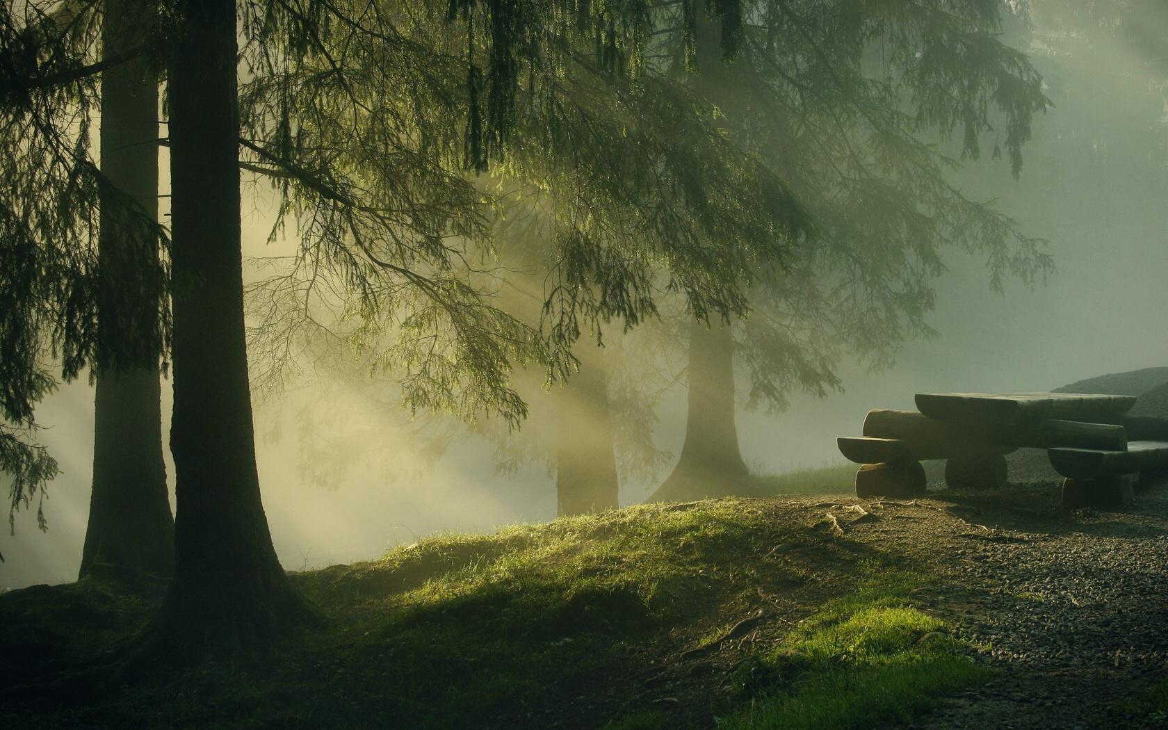 Купить постер таинственный лес большого формата, фотообои,